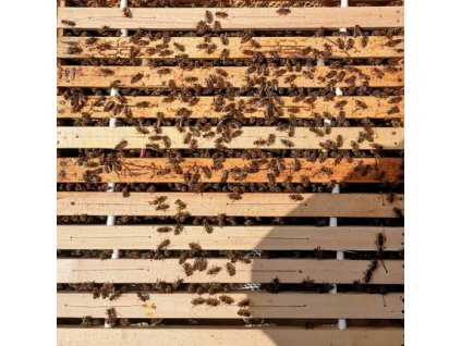 Vyzimované včelstvo 10 rámků s úlem