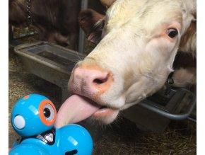 Roboti a krávy + ubytování a jídlo