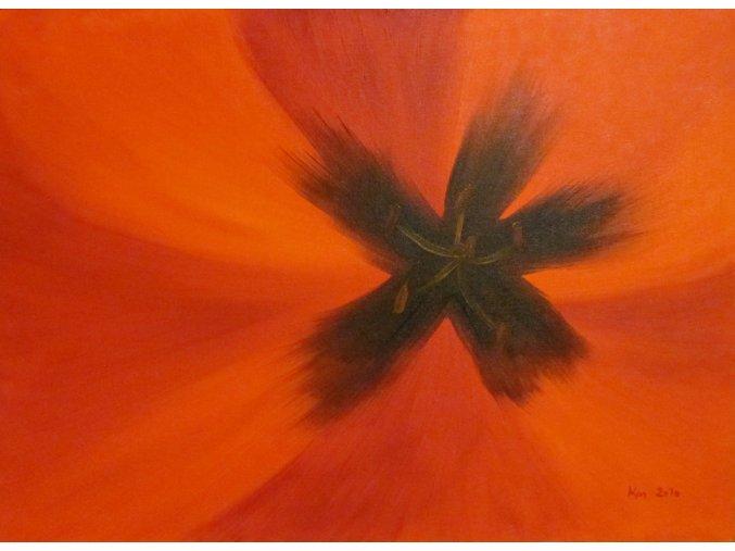 tuliprani