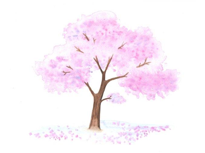 sakura w