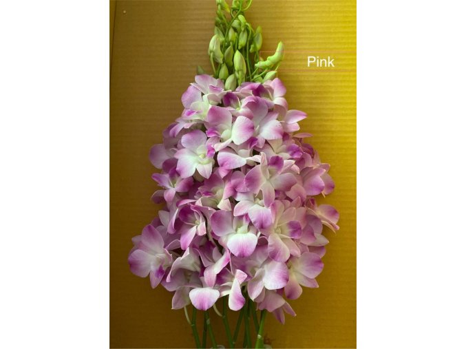 orchid ping
