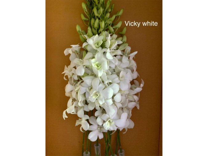 orchid vicky white