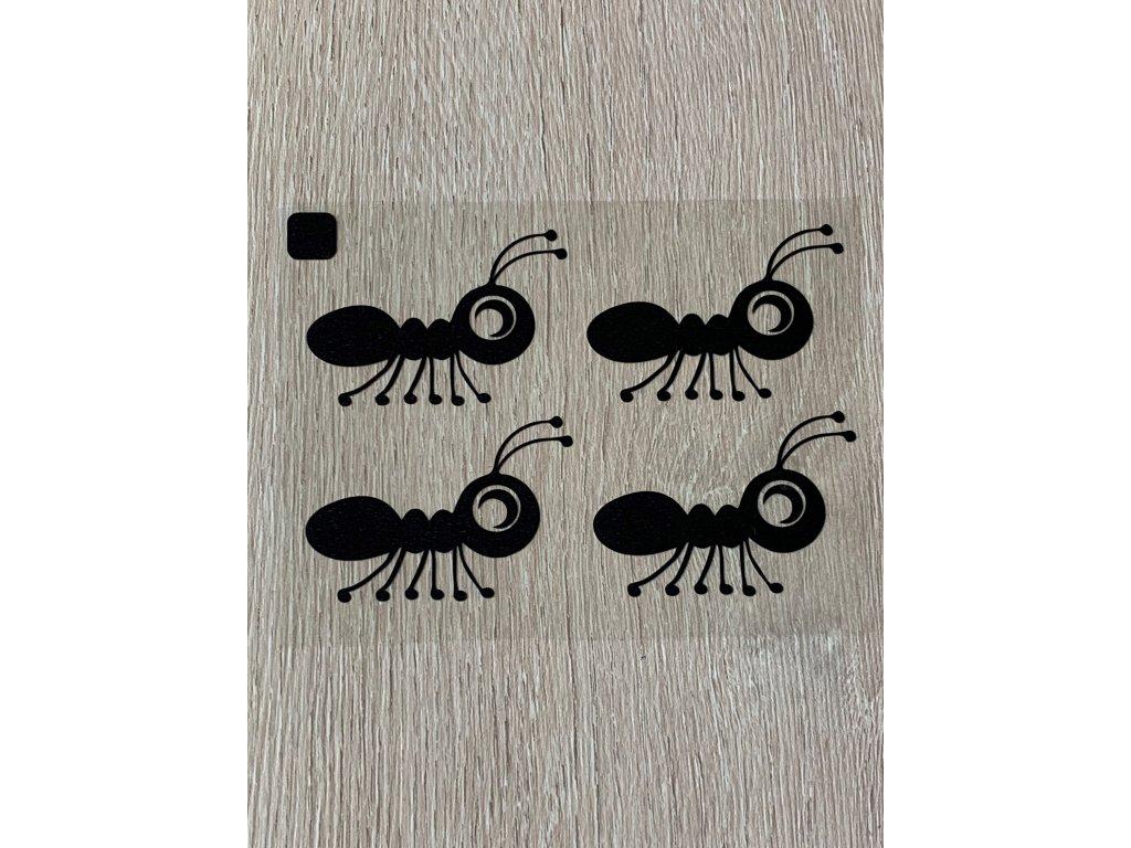 cerni mravenci