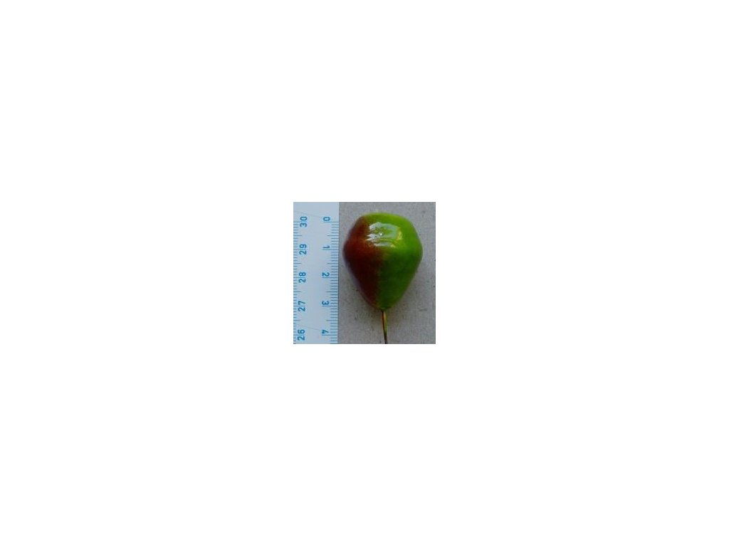 hruška střední zeleno červená, 2 ks