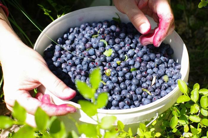 Ovoce při VERO keto dietě? Zkuste borůvky!