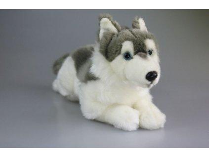 plyšový pes husky