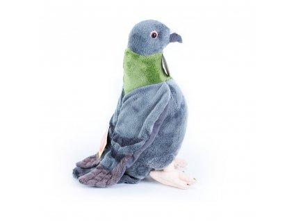 plysovy-holub