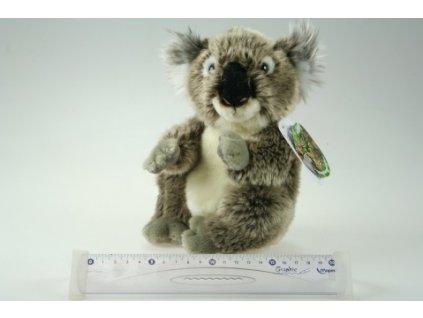 plysova koala