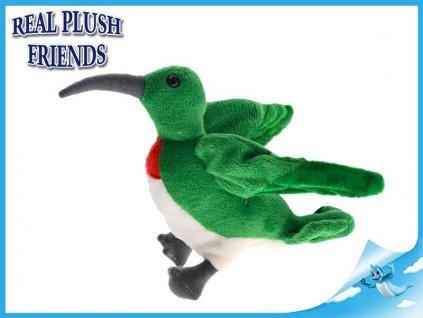 plysovy kolibrik