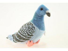 plyšový holub