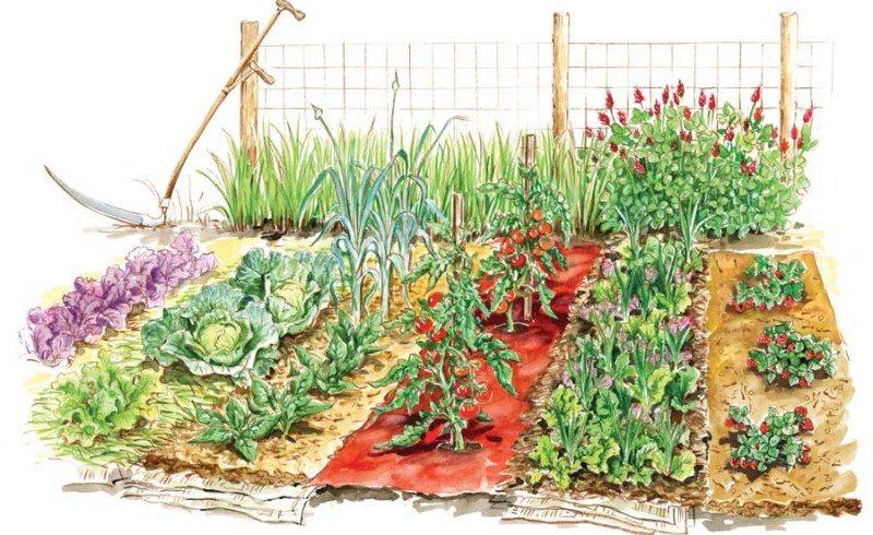 Jak se starat o zahradu na jaře