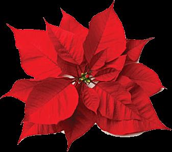 Vánoční umělé květiny