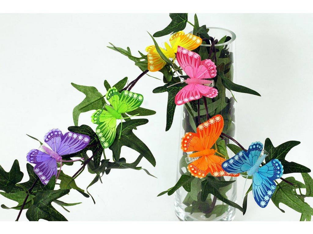 Motýl s klipem, cena za 12ks/1 box