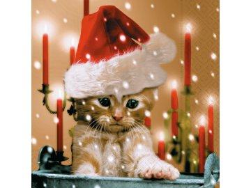 vánoční kot