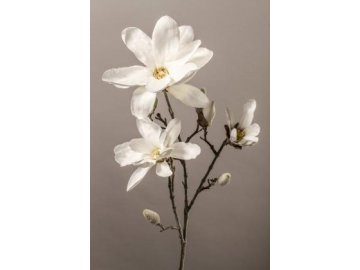 12453 magnolie bila 90cm