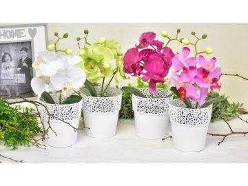 Mini orchidej v květináči