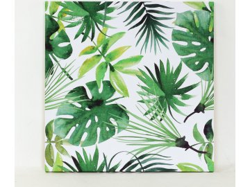Obraz plátěný   listy pokojových rostlin