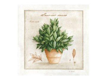 Obraz | bobkový list v květináči | 22x22cm