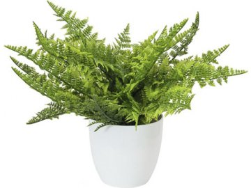 Kapradí | Europalms | zelené | 33cm