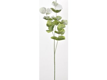 Zasněžený eukalyptus 75 cm