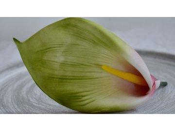 Květ kaly zelený velký