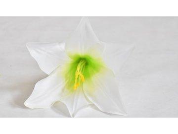 Květ bílé lilie