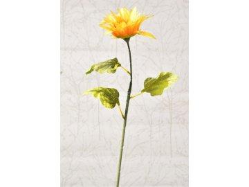 Slunečnice jednokvětá 70 cm