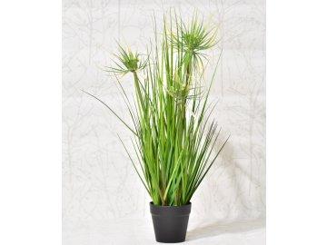 Tráva v květináči 55 cm