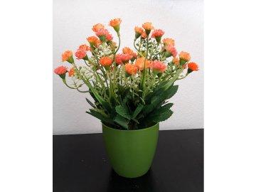 Mini karafiáty v plastovém květináči, barva oranžová