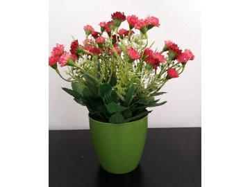 Mini karafiáty v plastovém květináči, barva červená