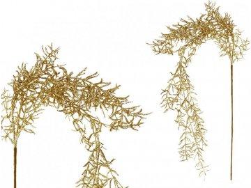 Asparagus převislý, zlatá barva.