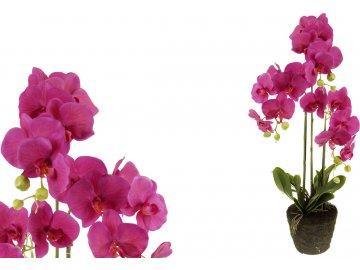 Velkokvětá orchidea, 3 stonky, barva fialová, umělá květina v balu.