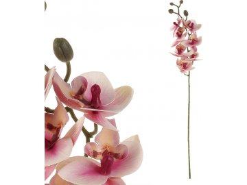 Orchidej - barva světle růžová.