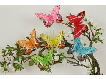 služba seznamování motýlů