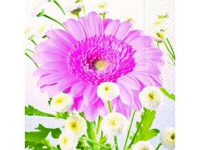 růžová gerberea