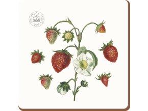 Podložka pod hrníček | korek | Strawberry Fayre | Creative Tops | 10x10cm