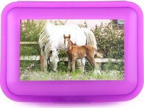 Svačinový box | Horses Dreams | Fialový | transparentní box | fotka bílého koně s hříbětem