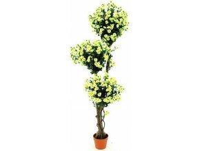 Margariten strom Europalms s květy, výška 160 cm