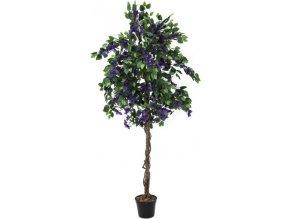 Bougainvillea Europalms Výška 150 cm/fialová