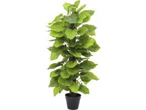 Rostlina Pothos Europalms Výška 125 cm