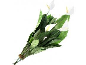 Spathiphyllum Europalms výška 77 cm