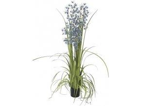 Orchidej travní Europalms Výška 140 cm/modré květy