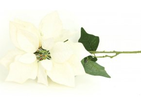 Vánoční růže, poinsécie , umělá květina , bílá zasněžená