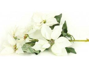 Vánoční růže, poinsécie 5 květů , umělá květina , bílá zasněžená