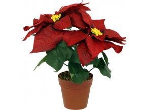 Vánoční hvězda červená 2 květy