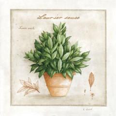 Obraz bobkový list v květináči 22x22cm