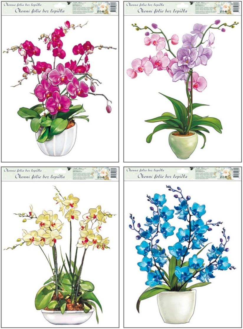 Anděl Přerov Okenní fólie orchidej 42x30cm set 4 ks