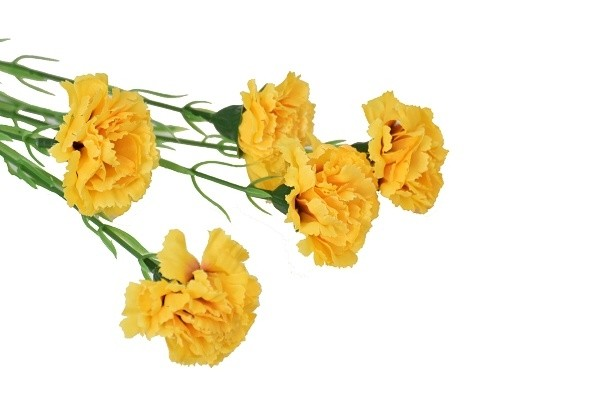 Harasim Kytice karafiátů 61cm Barva: žlutá