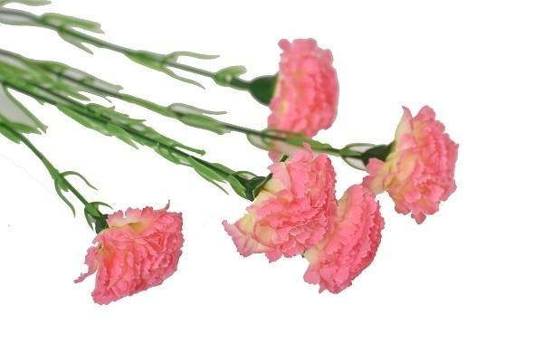 Harasim Kytice karafiátů 61cm Barva: růžová