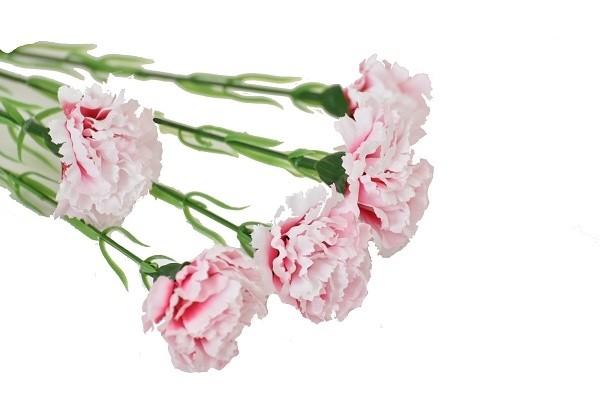 Harasim Kytice karafiátů 61cm Barva: světle růžová